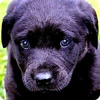 Adopt A Pet :: ELLIOT(HAPPY-PLAYFUL SO LOVING - Wakefield, RI
