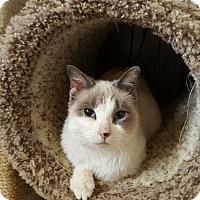 Adopt A Pet :: Rowena - Duluth, GA