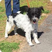 Adopt A Pet :: Roo Roo - Sagaponack, NY