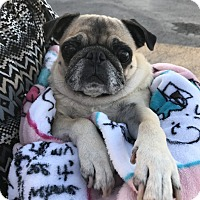 Adopt A Pet :: Polly - Austin, TX