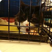 Adopt A Pet :: Bandit - Avon, OH