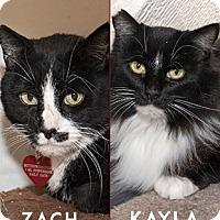 Adopt A Pet :: Zach and Kayla - Oakland, CA