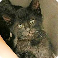 Adopt A Pet :: Bastian - Des Moines, IA