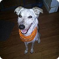 Adopt A Pet :: Lady - Grove City, OH