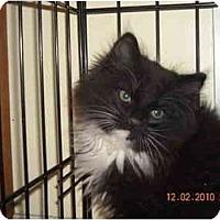 Adopt A Pet :: George & Gracie - Riverside, RI