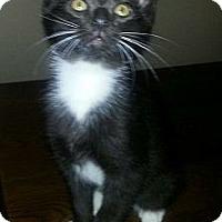 Adopt A Pet :: Amore' - Monroe, GA