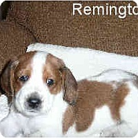 Adopt A Pet :: Remington - Phoenix, AZ