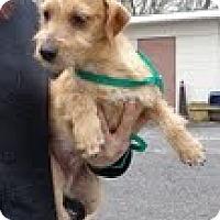 Adopt A Pet :: Tramp - Staunton, VA