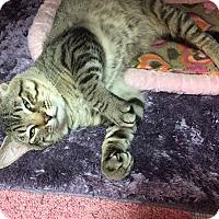 Adopt A Pet :: Rocky - Topeka, KS