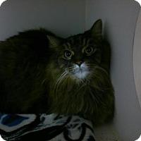 Adopt A Pet :: Preston - Hamilton, ON
