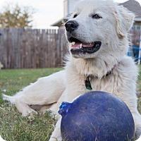 Adopt A Pet :: Sebastian - Tulsa, OK