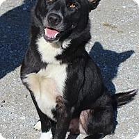 Adopt A Pet :: Cash - Normandy, TN