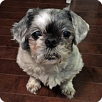 Adopt A Pet :: Loulou - Toronto, ON