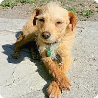 Adopt A Pet :: Woody - Winters, CA