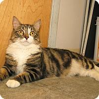 Adopt A Pet :: Fluffy - Milford, MA