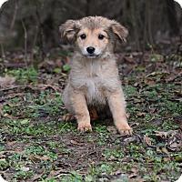 Adopt A Pet :: BillieJo - Groton, MA