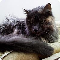 Adopt A Pet :: April - N. Billerica, MA