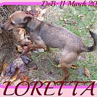 Adopt A Pet :: LORETTA - Middletown, CT