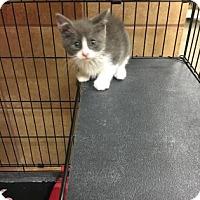 Adopt A Pet :: Tarzan - Philadelphia, PA