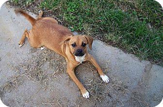 Beagle Mix Dog for adoption in Houston, Texas - Wilma