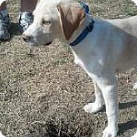 Adopt A Pet :: Baby Lucky - Marlton, NJ
