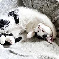 Adopt A Pet :: Bailey - Xenia, OH