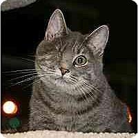 Adopt A Pet :: Silver - Marietta, GA