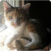 Adopt A Pet :: Pumpkin - Summerville, SC