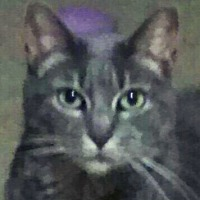 Domestic Shorthair Cat for adoption in Madison, Tennessee - Tabitha