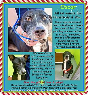Staffordshire Bull Terrier/Labrador Retriever Mix Dog for adoption in La Crosse, Wisconsin - Oscar