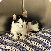 Adopt A Pet :: Chloe - Colmar, PA