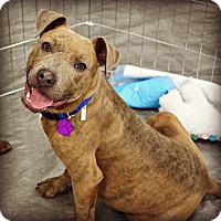 Adopt A Pet :: Ralph - East Rockaway, NY