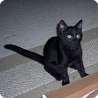 Adopt A Pet :: Berry - Richmond, VA