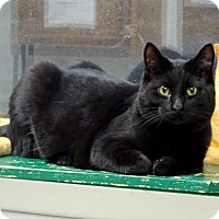 Adopt A Pet :: Tater - Belleville, MI