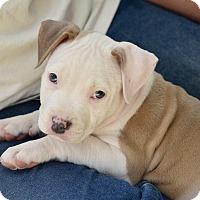 Adopt A Pet :: Cupid - Mission Viejo, CA