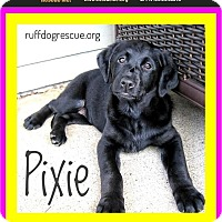 Adopt A Pet :: PIXIE - Milton, GA