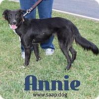 Adopt A Pet :: Annie - Newport, KY