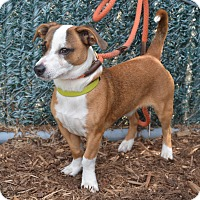 Adopt A Pet :: Marty - available 4/22 - Sparta, NJ