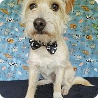 Adopt A Pet :: Hondo - San Antonio, TX