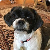 Adopt A Pet :: Sugar - Studio City, CA