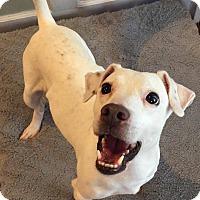 Adopt A Pet :: Four - Dayton, OH