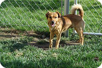 Spaniel (Unknown Type)/Spaniel (Unknown Type) Mix Dog for adoption in Tustin, California - Colby