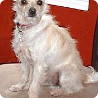 Adopt A Pet :: Toto - Temecula, CA