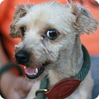 Adopt A Pet :: Koolaid - Canoga Park, CA