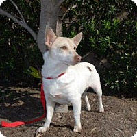 Adopt A Pet :: Macy - Sugar Land, TX