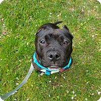 Adopt A Pet :: Roxy - Shrewsbury, NJ