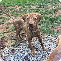 Adopt A Pet :: Callie - Arden, NC