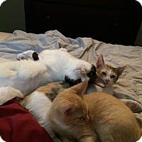 Adopt A Pet :: Bebe - Riverview, FL