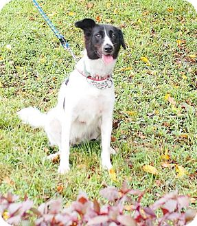 Border Collie Mix Dog for adoption in Castro Valley, California - Beanny