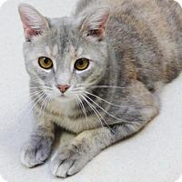 Adopt A Pet :: Pixie - Shaftsbury, VT